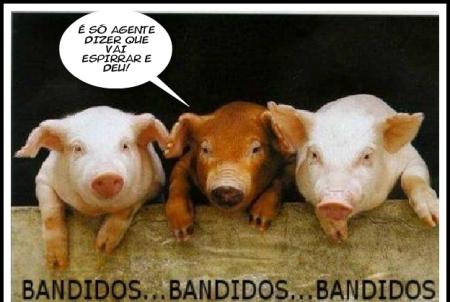 Assalto de porcos